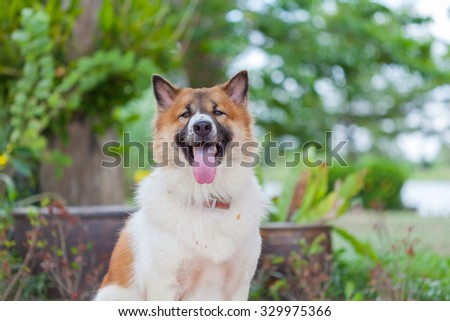 Thai dog sitting and smiling with nature soft background - stock photo