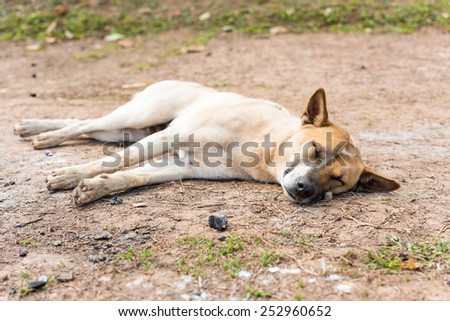 Thai dog sleep - stock photo