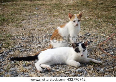 Thai domestic cats sitting in garden