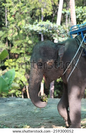 Thai elephant the  photographed a close up - stock photo