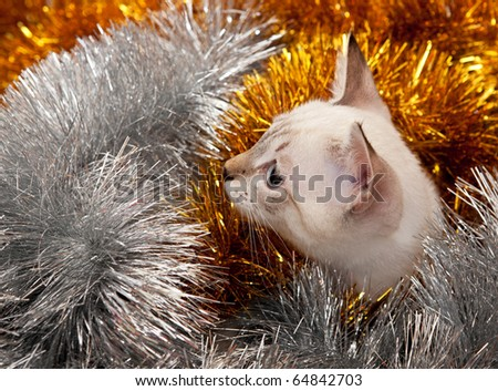 Thai kitten in Christmas tinsel. - stock photo
