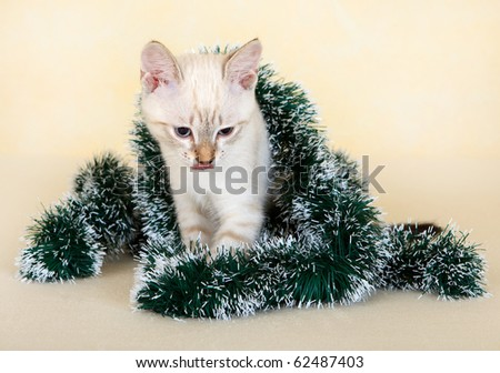 Thai kitten in Christmas tinsel. On the eastern calendar 2011 - the year the cat. - stock photo