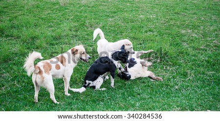 Thai local dog on the meadow  - stock photo