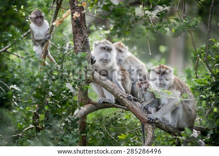 Thai monkey in public park - stock photo