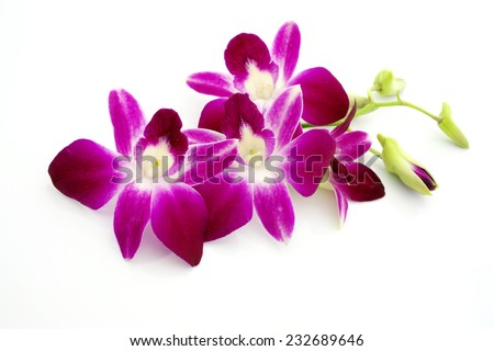Thai Orchid flowers - stock photo
