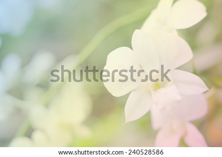 Thai Orchids for background - stock photo