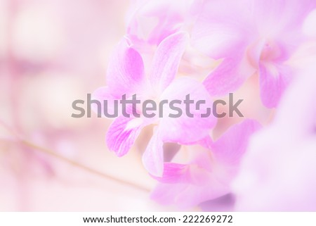 Thai Orchids soft focus on pastel tones. for background  - stock photo