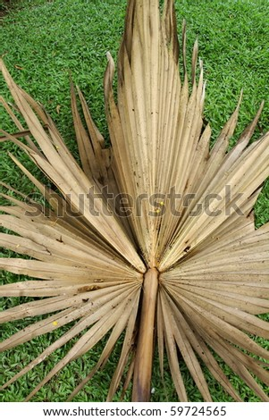 Thai palm leaf wither