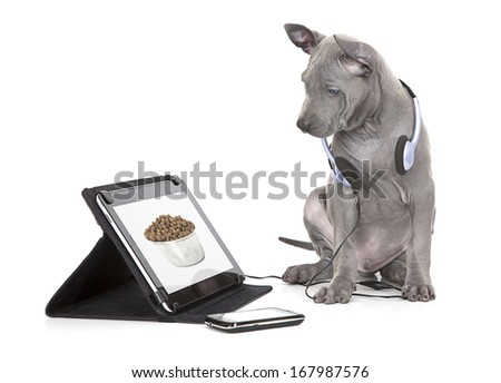 Thai ridgeback puppy looking at dog food in bowl on digital tablet computer  - stock photo