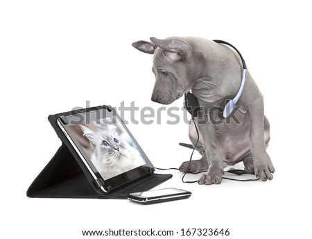 Thai ridgeback puppy looking at the cat photo on digital tablet computer  - stock photo
