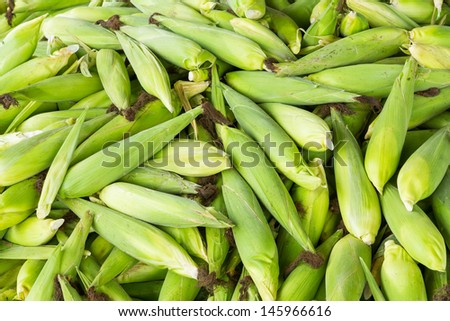 Thai sweet corn piles fresh from farm