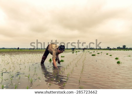 ThaiBinh, Vietnam - February 27, 2015: Farmer working in the filed in Thai binh, Vietnam.