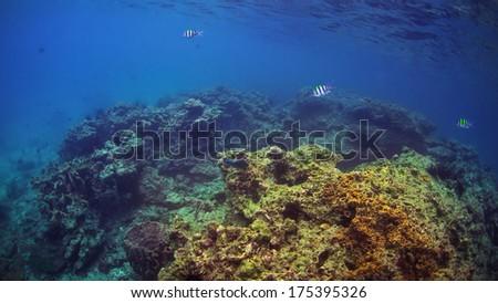 Thailand, coral reef underwater. - stock photo