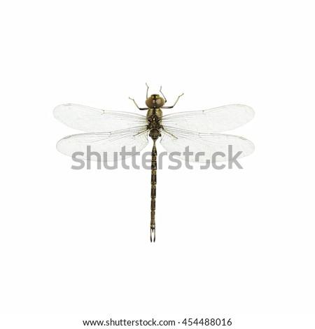 Thailand dragonfly on white background - stock photo