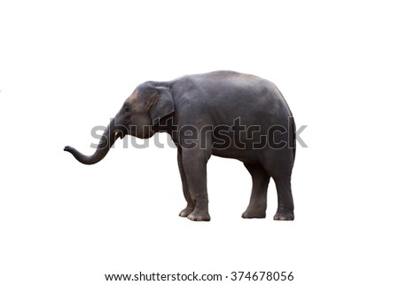 Thailand elephant on white background