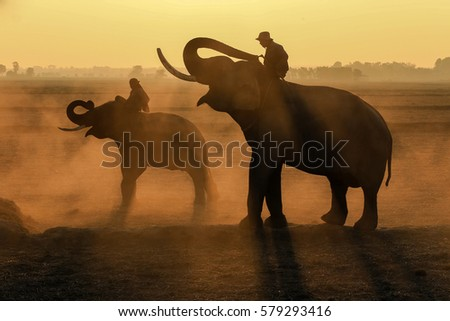 Thailand Elephants and two mahout at sunrise