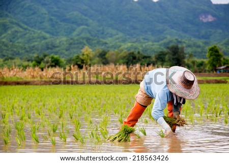 Thailand farmers - stock photo