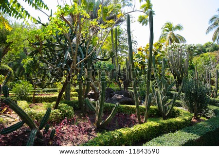 Thailand palm and cactae (scculent) garden in summer sunny day - stock photo