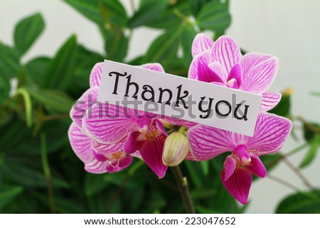 Thank you card with pink orchid  - stock photo
