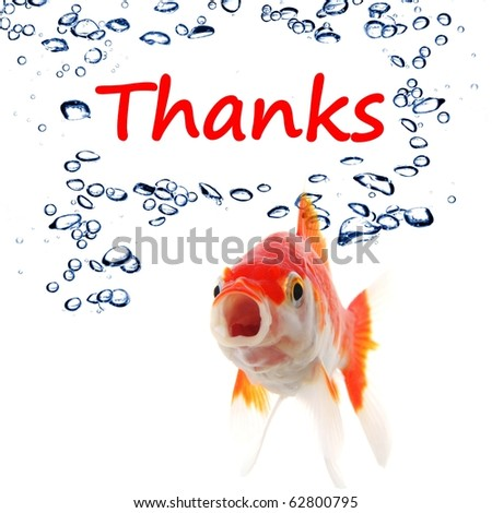 thanks or thank you concept with word and goldfish - stock photo
