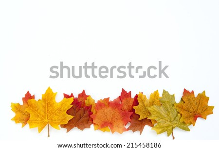 Thanksgiving Autumn Leaves Background on White