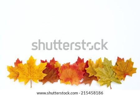 Thanksgiving Autumn Leaves Background on White - stock photo