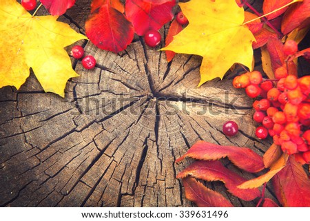 Background design autumn leaves and cranberries over cracked wooden