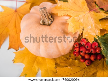 Thanksgiving background: pumpkins and fallen leaves. Copy space for text. Halloween, Thanksgiving day or seasonal autumnal. Design mock up. Autumn still life. Hawthorn. Maple leaves.