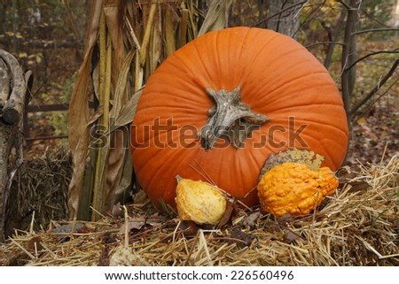 Thanksgiving Display of Pumpkin and Gourds - stock photo