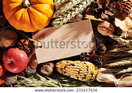 Thanksgiving - pumpkins, Apple,  maize cob, crop and greeting card on wooden board with copyspace - stock photo