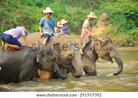 The activities at The young Elephant school : elephant bathing in the river, elephant painting and elephant riding, March, 2015 in Chiangmai, THAILAND
