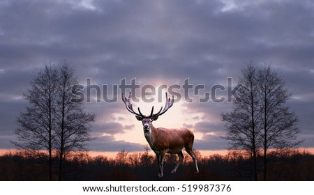The adult male deer on a background of night autumn forest.Wild nature