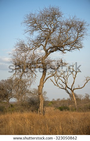 The African Bush starts to go to sleep as the day winds down - stock photo