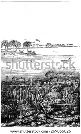 The age of the Jurassic sea at Burgundy, France, vintage engraved illustration. Earth before man  1886. - stock photo
