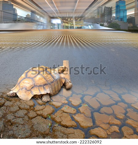 The age of the turtle's environment, it is changing its conversion to the ground in a marsh concrete pavers and present in a civilized city.  - stock photo