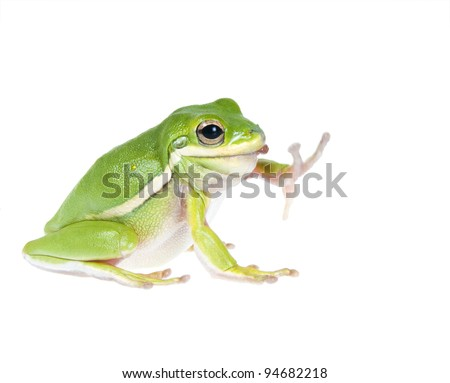 The American green tree frog (Hyla cinerea) of earthworm in the mouth. Enough - already ate too much! - stock photo