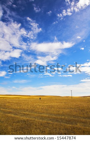 The American prairie in October. The lonely horse is grazed among boundless steppes - stock photo