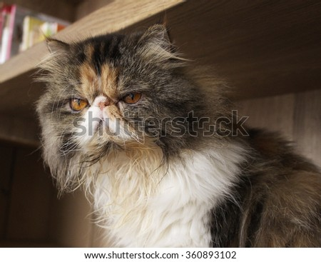The Angry Cat - stock photo