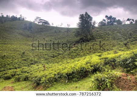 The area of the Knuckles mountains around Kandy in Sri Lanka provide spectacular views with beautiful tea plantations