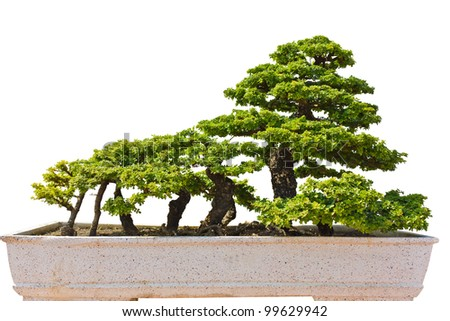 The art of bonsai in the park. - stock photo
