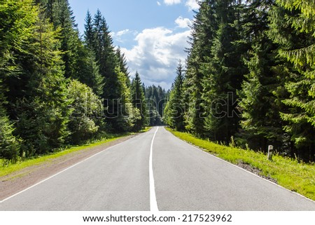 The asphalted road between conifers pass in the woods - stock photo