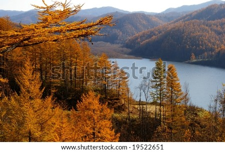 The Autumn larches and lake.