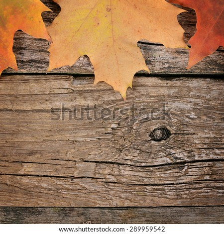 The autumn maple leaves on wooden background - stock photo
