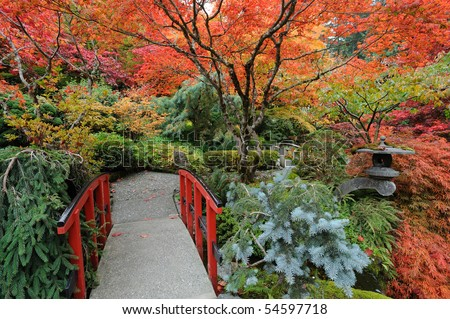 The autumnal japanese garden in victoria, vancouver island, british columbia, canada - stock photo
