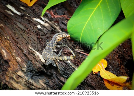 The baby water monitor on the tree. - stock photo