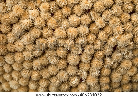 The background and texture of dry flowers.
