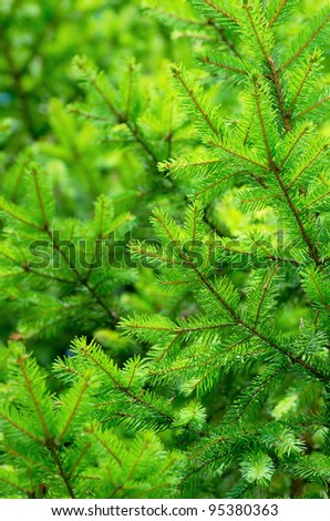 The background of bright green spruce - stock photo