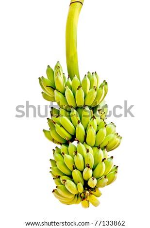 The Banana isolated on white background - stock photo