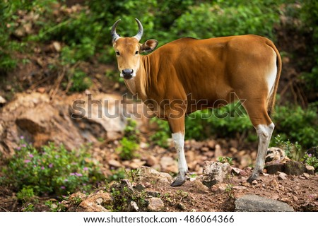 endangered species family iucn red list stock images royalty free images vectors