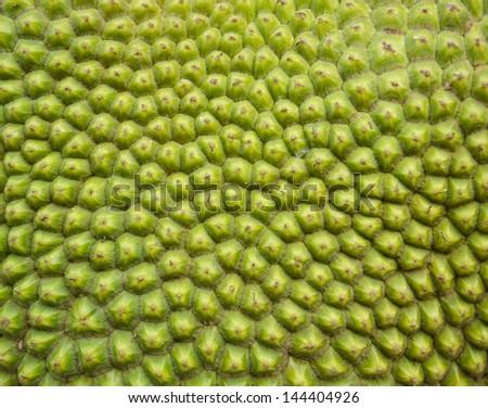 The bark of jackfruit green - stock photo